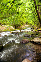 Spring Stream - Great Smoky Mountains National Park