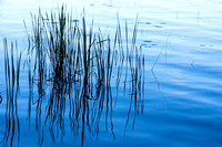 Water Grasses - Reflections (Hamlin Lake, Ludington State Park)