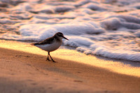 Lone Bird - Sunset on the Beach